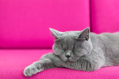 Cat napping Stock Images