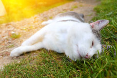 Cat napping on groun hot summer day Royalty Free Stock Images
