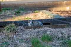 Cat napping in the shade. A cat naps in a field along a concrete trough that carries water to the nearby farms Stock Photography