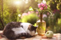 Cat napping sleep with flox flowers in vase. On summer garden background Stock Photo