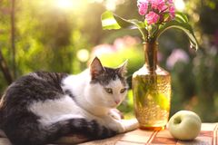 Cat napping sleep with flox flowers in vase. On summer garden background Royalty Free Stock Image