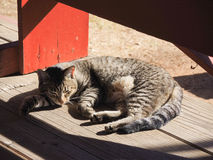 Cat napping. Cat sleeping in the warmth of the sun Royalty Free Stock Photos