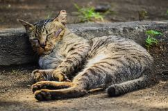 Cat Napping. Cat take a nap in a sunny day Stock Image