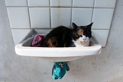 Cat napping in a washbasin. Female cat sleeping in a washbasin Royalty Free Stock Photography