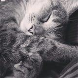 Cat Naps Lizenzfreie Stockfotografie