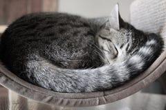Cat Naps royaltyfri bild