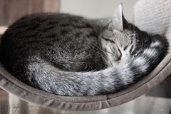 Cat Naps royalty free stock image