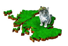 Cat with national symbol of Scotland Stock Photography