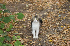 Cat in nature Stock Image