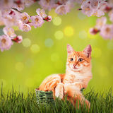 Cat in nature Stock Image
