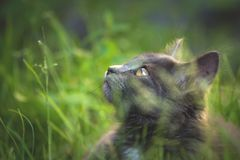 Cat in the nature royalty free stock images