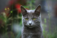 Cat in the nature royalty free stock image