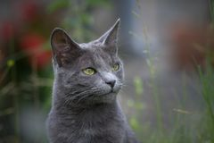Cat in the nature royalty free stock photo