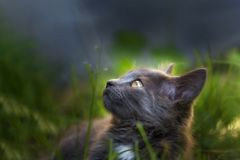 Cat in the nature stock images