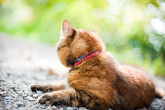 Cat in Nature Stock Images