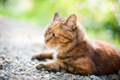 Cat in Nature Royalty Free Stock Photos