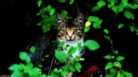 Cat in nature. Sitting cat between leaves in summer Royalty Free Stock Photography