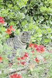 Cat in nature Royalty Free Stock Photography