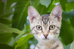 Cat. A Cat on nature world Royalty Free Stock Photos