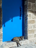 Cat near a blue metal door in old Jaffa Royalty Free Stock Photo