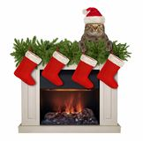 Cat near the Christmas fireplace royalty free stock image
