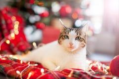 Cat near christmas tree royalty free stock photos