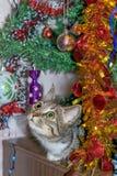 Cat near the Christmas tree