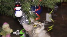 Cat near the Christmas tree stock video