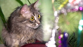 Cat near the Christmas tree stock footage