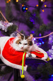 Cat near christmas tree Stock Images