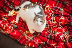 Cat near christmas tree royalty free stock images