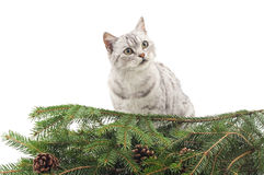 Cat near the Christmas tree. Royalty Free Stock Images