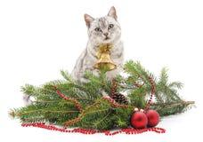 Cat near the Christmas tree. Royalty Free Stock Photos