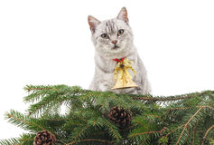 Cat near the Christmas tree. Stock Photos