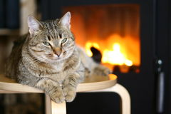 Cat near Fireplace Stock Photo