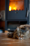 Cat near Fireplace Stock Images
