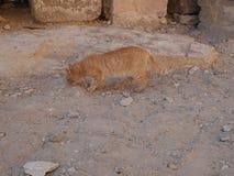 Cat near Mastaba, next to Khufu`s Pyramid and sphinx Royalty Free Stock Photography