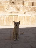 Cat near Mastaba, next to Khufu`s Pyramid and sphinx Royalty Free Stock Images