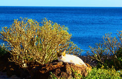 The cat near the ocean. The cat sleeping near the ocean Royalty Free Stock Image
