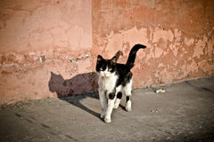 Wild Cat. Near old house, siberia, omsk region Royalty Free Stock Photography