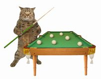 Cat near the pool table stock photo