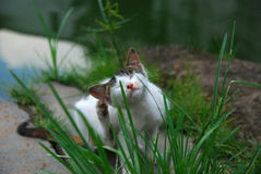 Cat near a river. A cat siting near a river, enjoy his time Royalty Free Stock Photos