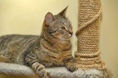 Cat near scratching  posts Stock Photos
