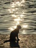 Cat near the sea. (in the rays of opposite light – as a natural effect Stock Images