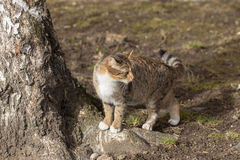 Cat near the tree Royalty Free Stock Image