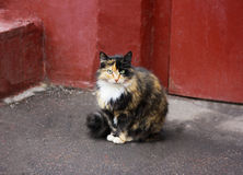 The cat near the wall of the house. Stock Images