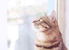 Cat near window Stock Image