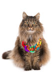 Cat with necklace Royalty Free Stock Images