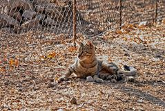 A cat needs warmth. So the cat must look friendly in the area with such a radiation by the sun royalty free stock images