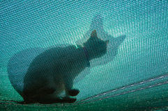Cat on a net roof Royalty Free Stock Photos